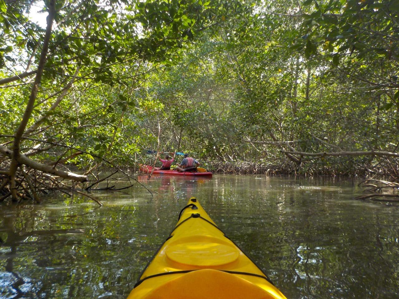 mangrove, sainte rose, photographie, paysage, grand cul de sac marin