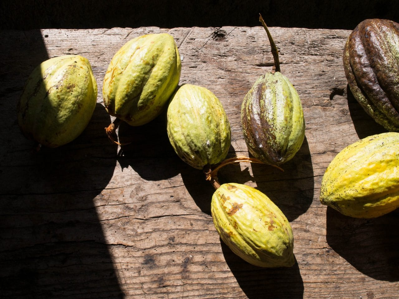 grivelière, café, cacao, vieux habitants, guadeloupe