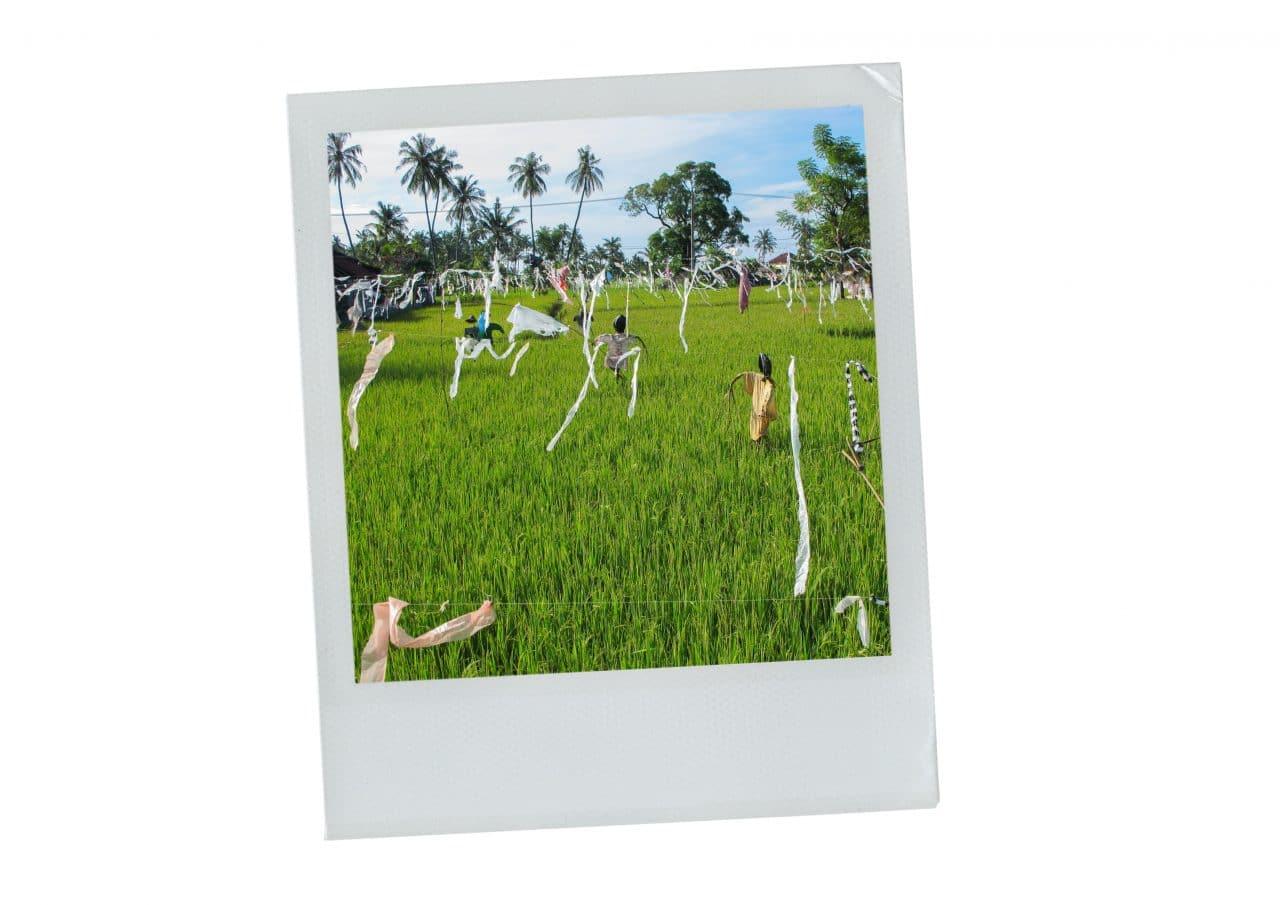 rizière, épouvantail, amen, bali, indonésie