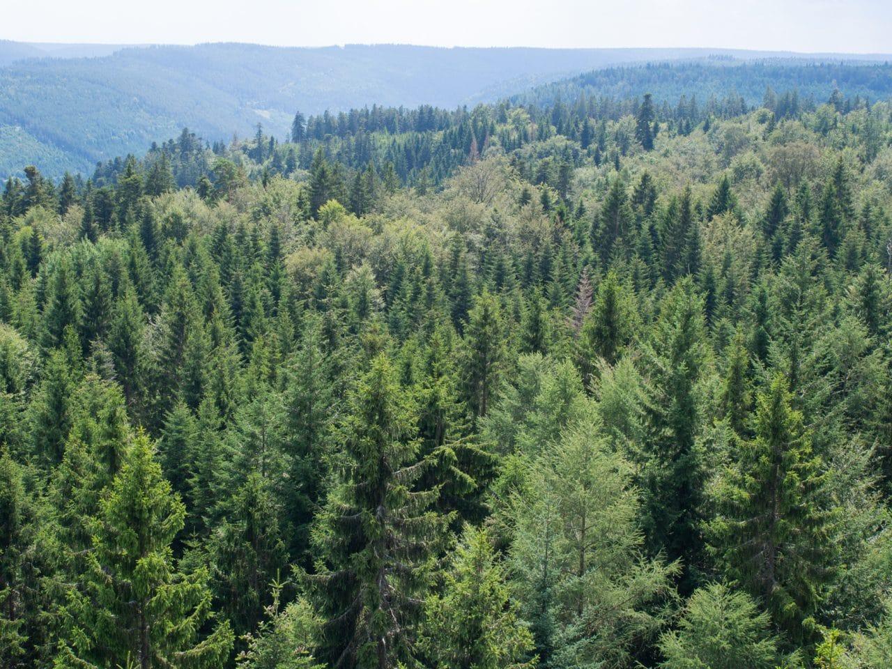 forêt noire, blackforest, scharzwald