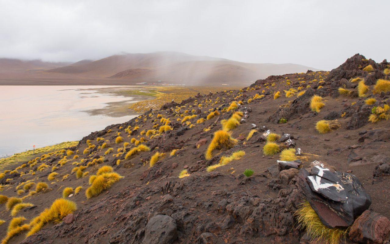 bolivie, altiplano, los lipez, laguna colorada