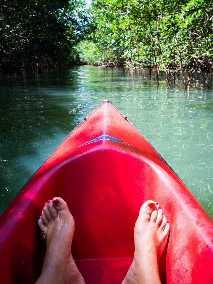 non bilan, kayak, mangrove, guadeloupe, sainte rose