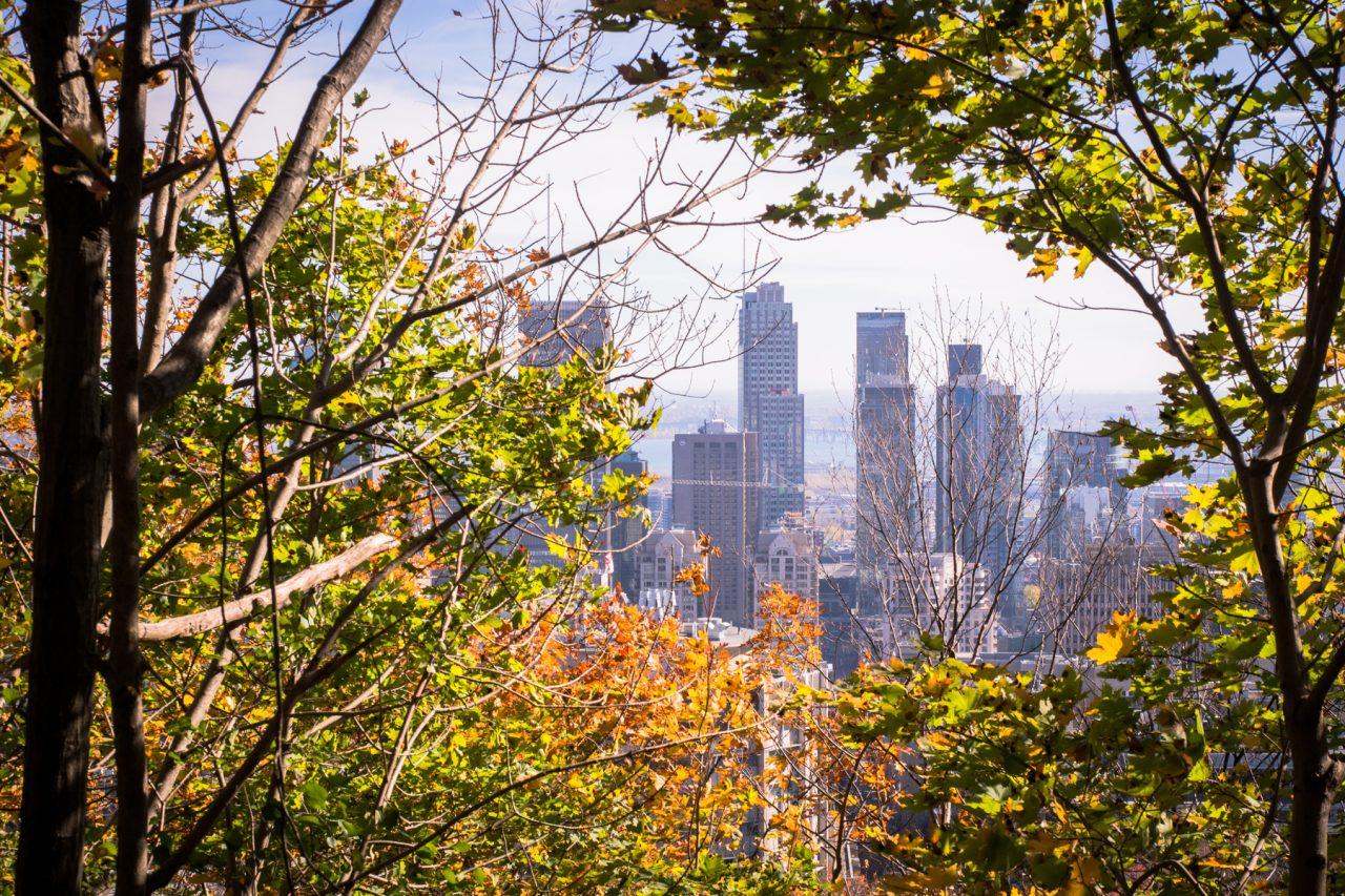l automne à montréal-point de vue montreal- séjour canada-gratte ciel montreal-voyage quebec