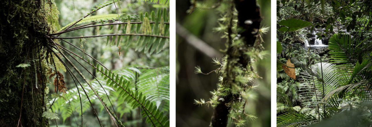guadeloupe foret tropicale-le bassin paradise capesterre belle eau