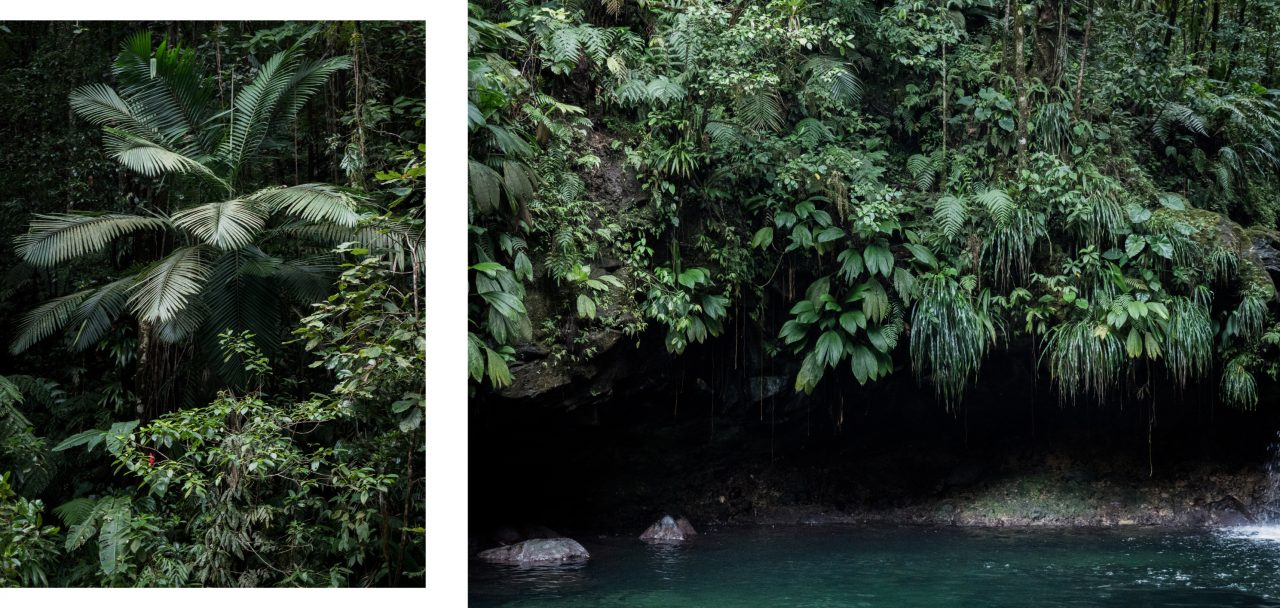bassin paradise-guadeloupe cascade-capesterre belle eau-guadeloupe foret tropicale
