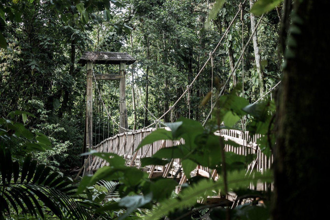 guadeloupe jungle-basse terre-arbre guadeloupe-