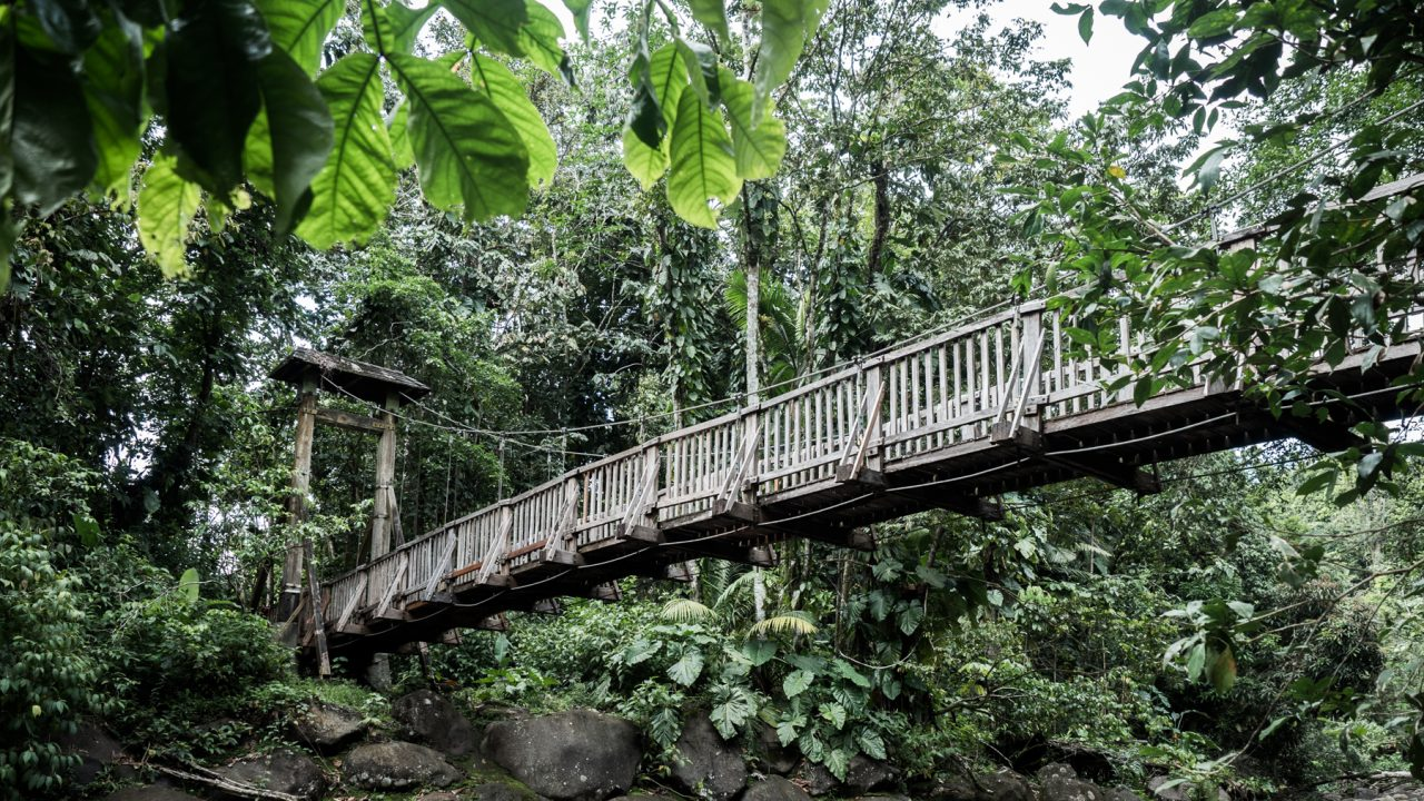 guadeloupe foret tropicale-guadeloupe jungle-basse terre guadeloupe