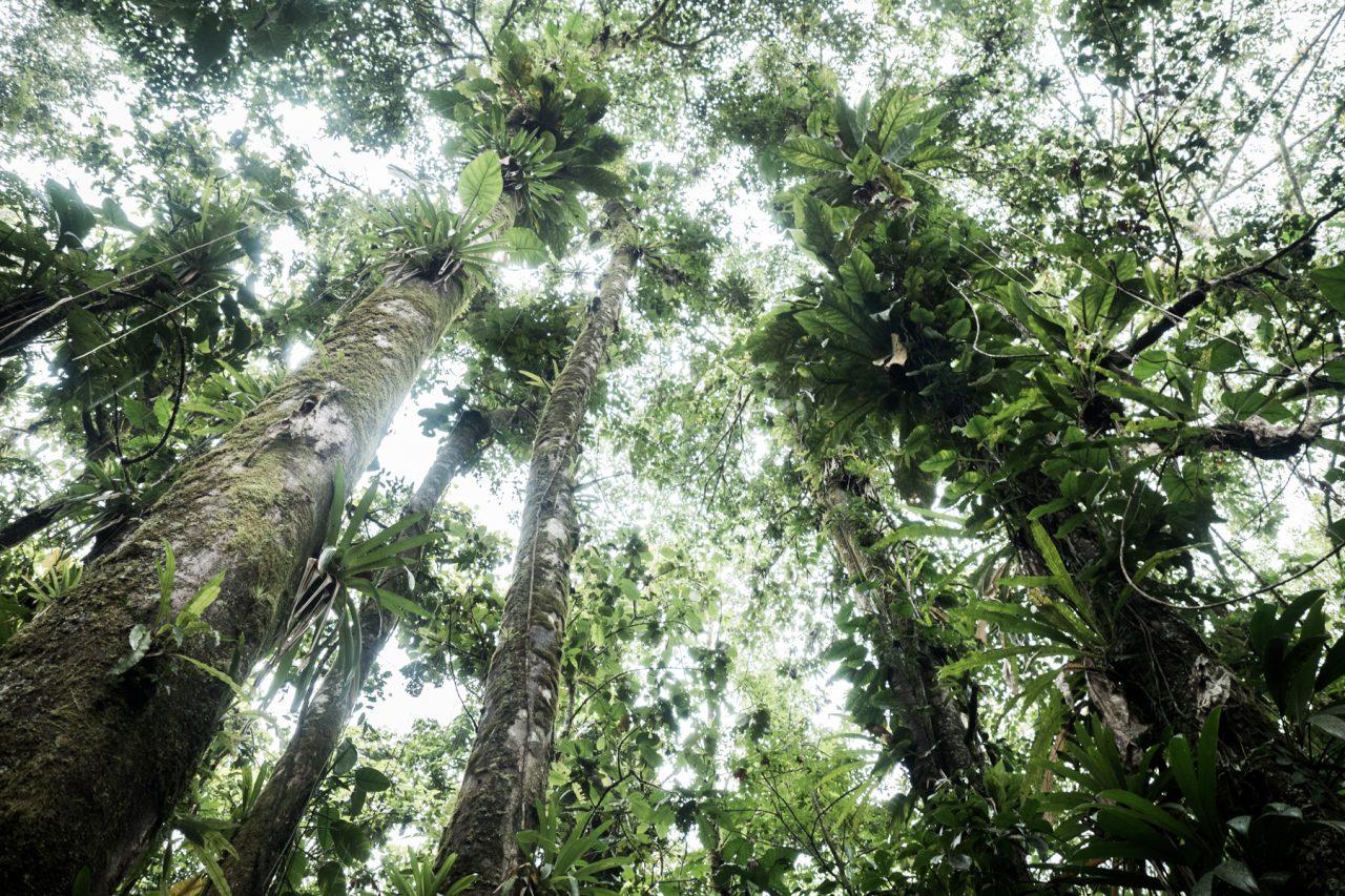 arbre guadeloupe-guadeloupe foret tropicale-guadeloupe jungle