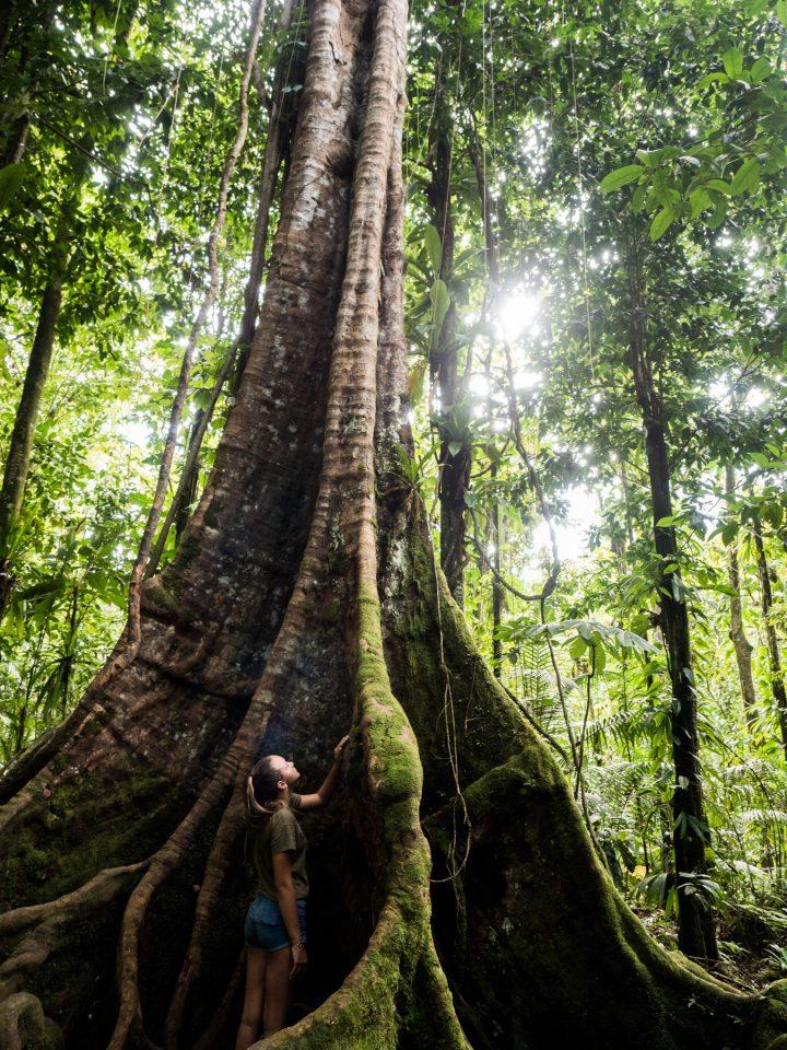 cascade guadeloupe-arbre guadeloupe-basse terre guadeloupe