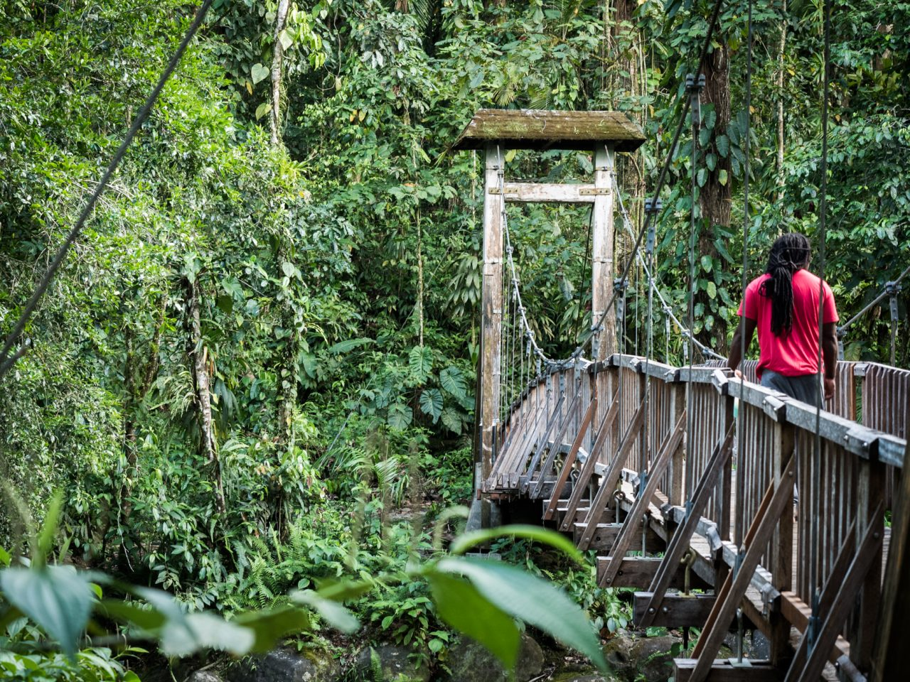 guadeloupe jungle-guadeloupe foret tropicale-riviere guadeloupe