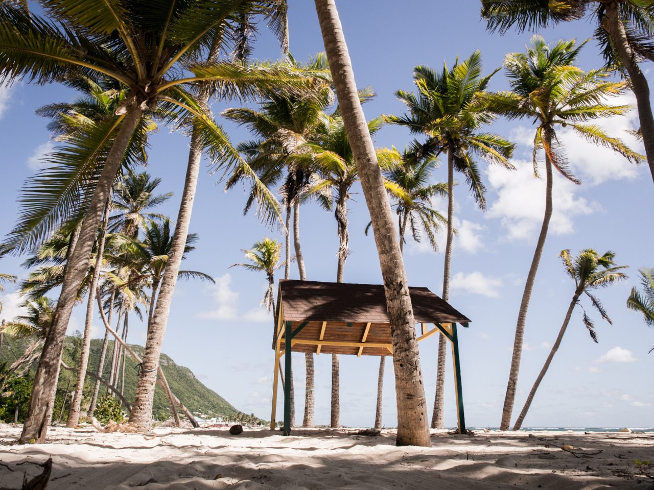 guadeloupe plage-ile desirade-les cocotiers guadeloupe