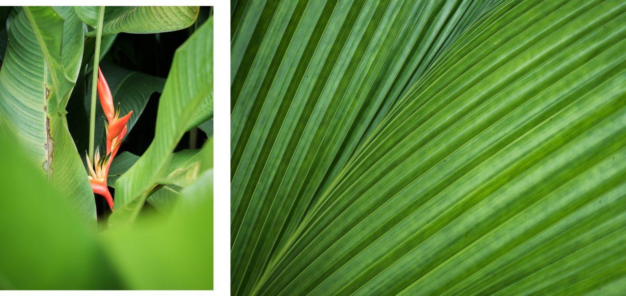 guadeloupe basse terre-végétation Guadeloupe-randonnée en guadeloupe