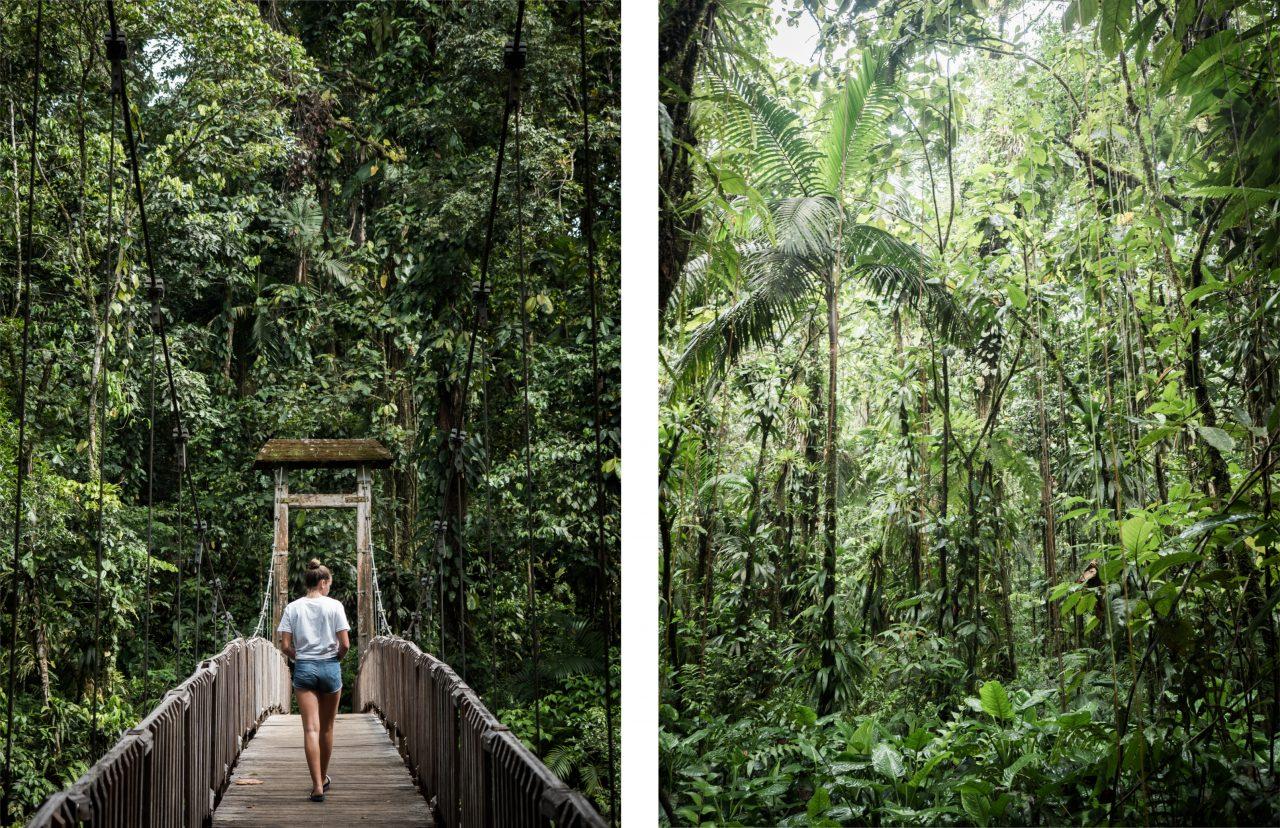 foret tropicale guadeloupeenne-cascade guadeloupe-randonnée en guadeloupe