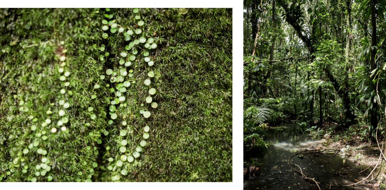 jungle guadeloupe-végétation guadeloupe-foret tropicale guadeloupe
