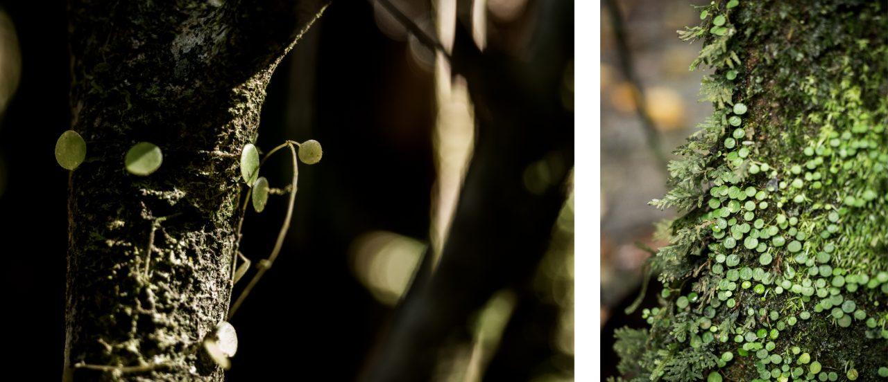 randonnée en guadeloupe-foret tropicale guadeloupe-basse terre-