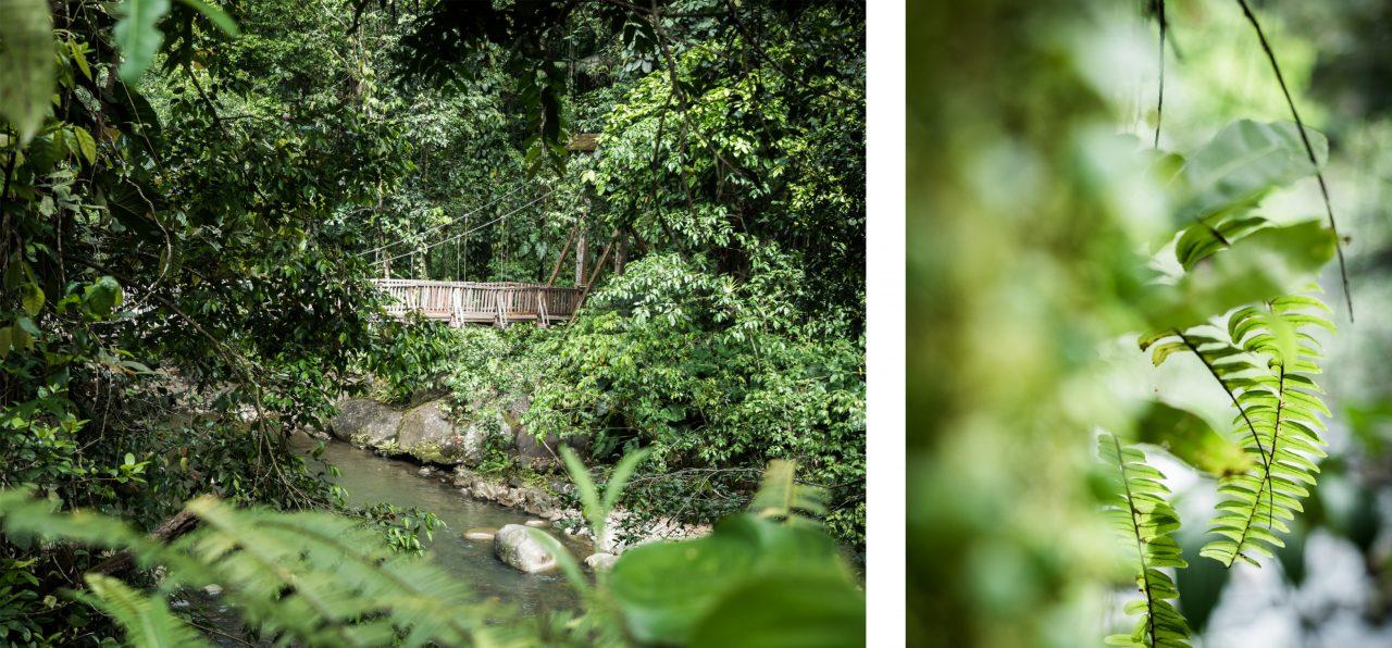 cascade guadeloupe-jungle guadeloupe-basse terre guadeloupe