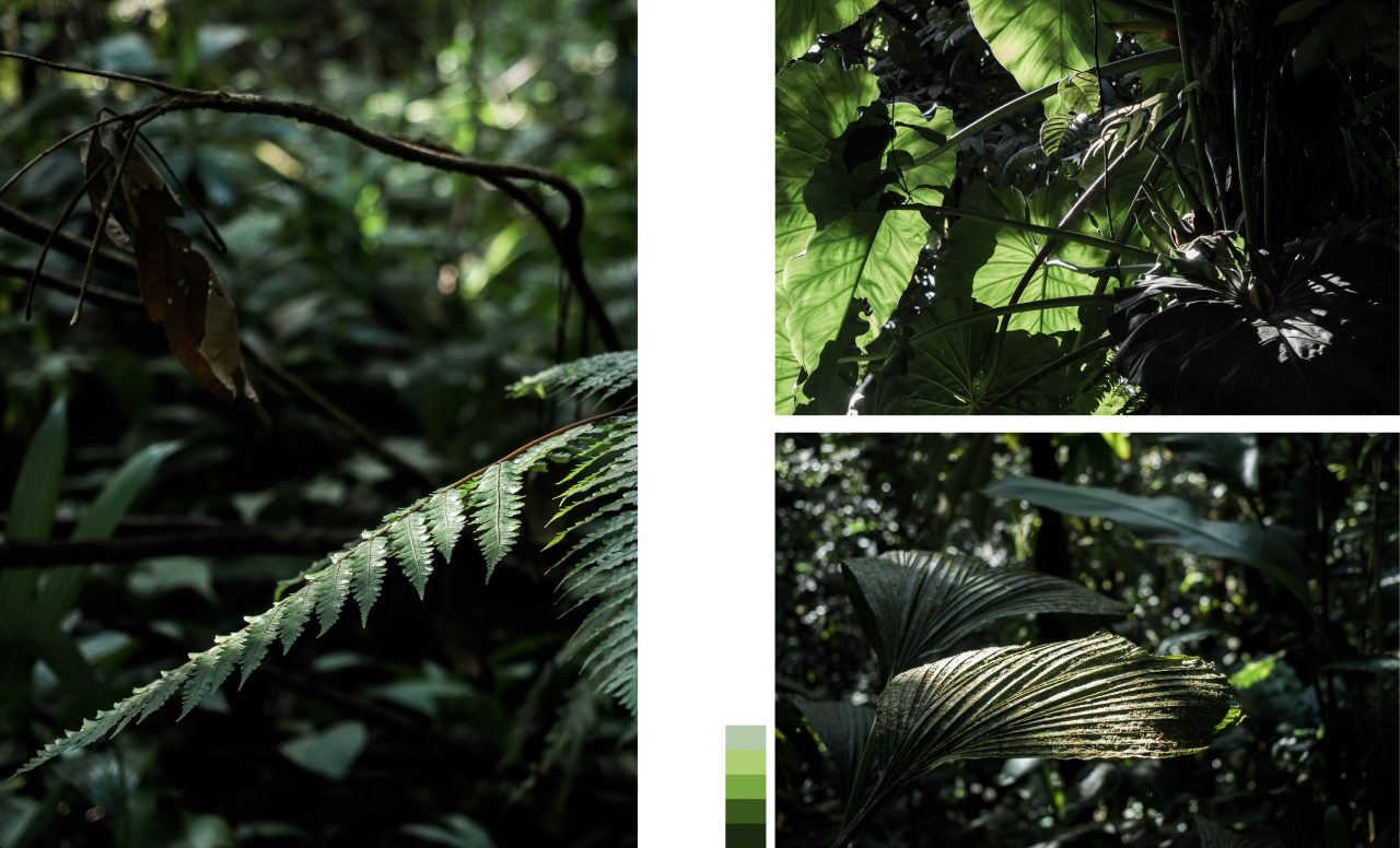 jungle guadeloupe-végétation guadeloupe- guadeloupe foret tropicale
