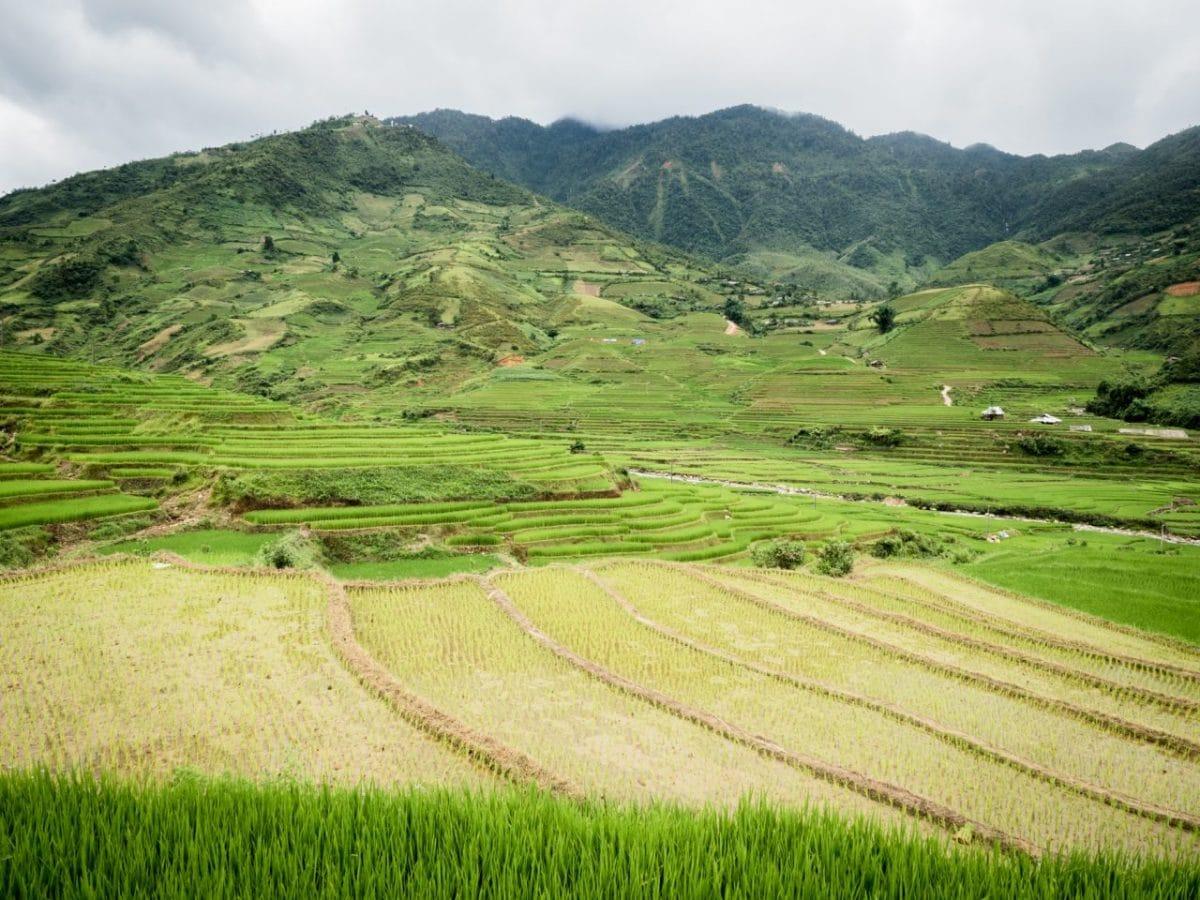 photo riziere vietnam -montagnes du nord vietnam-riziere vietnam nord -ethnies minoritaires du vietnam--lim thai, lim mong-
