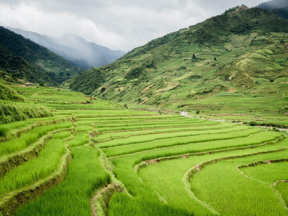 photo riziere vietnam -vietnam montagnes du nord-ethnies minoritaires du vietnam--lim thai, lim mong