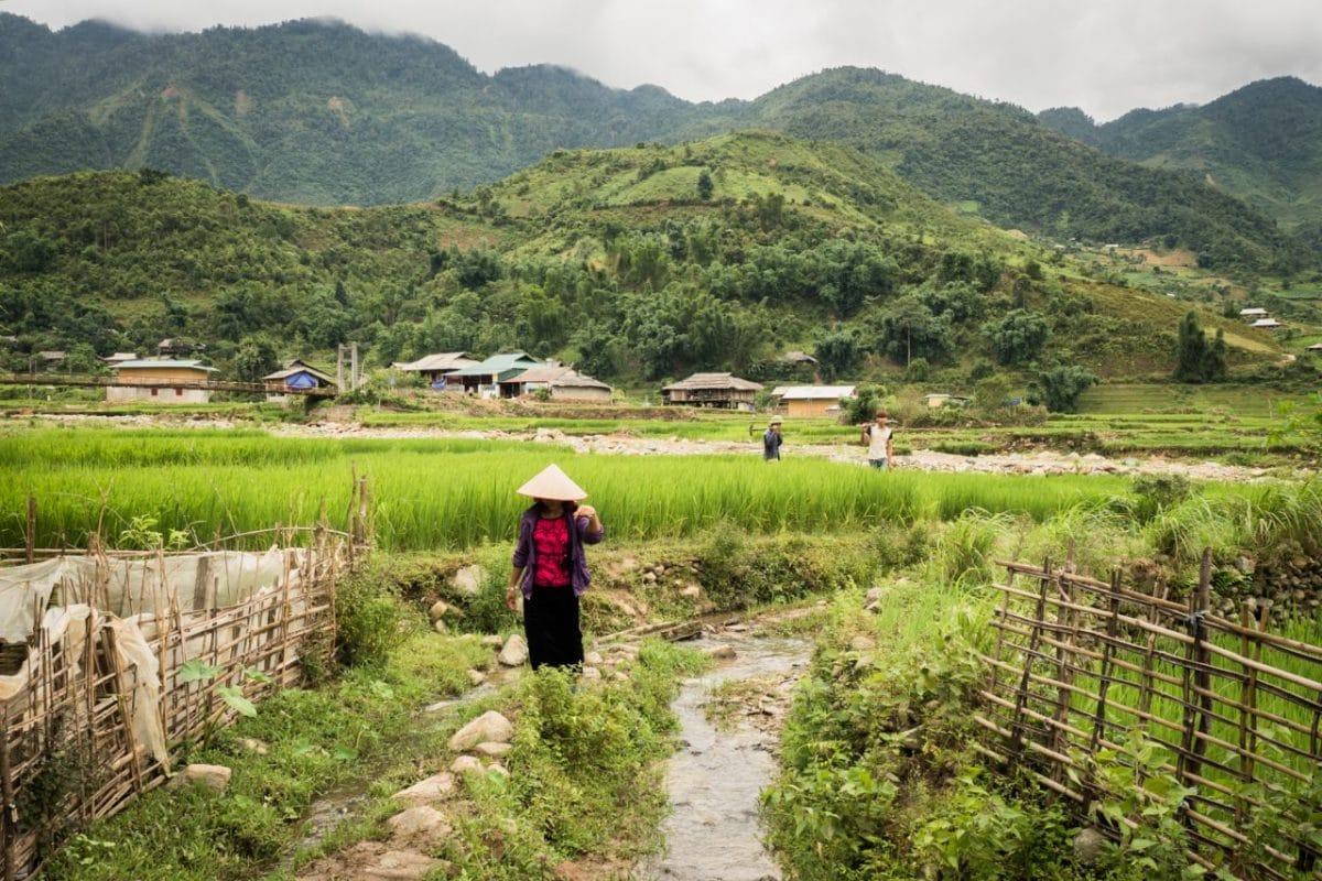 rizieres au vietnam nord -vietnam montagne-ethnie minoritaire du vietnam-