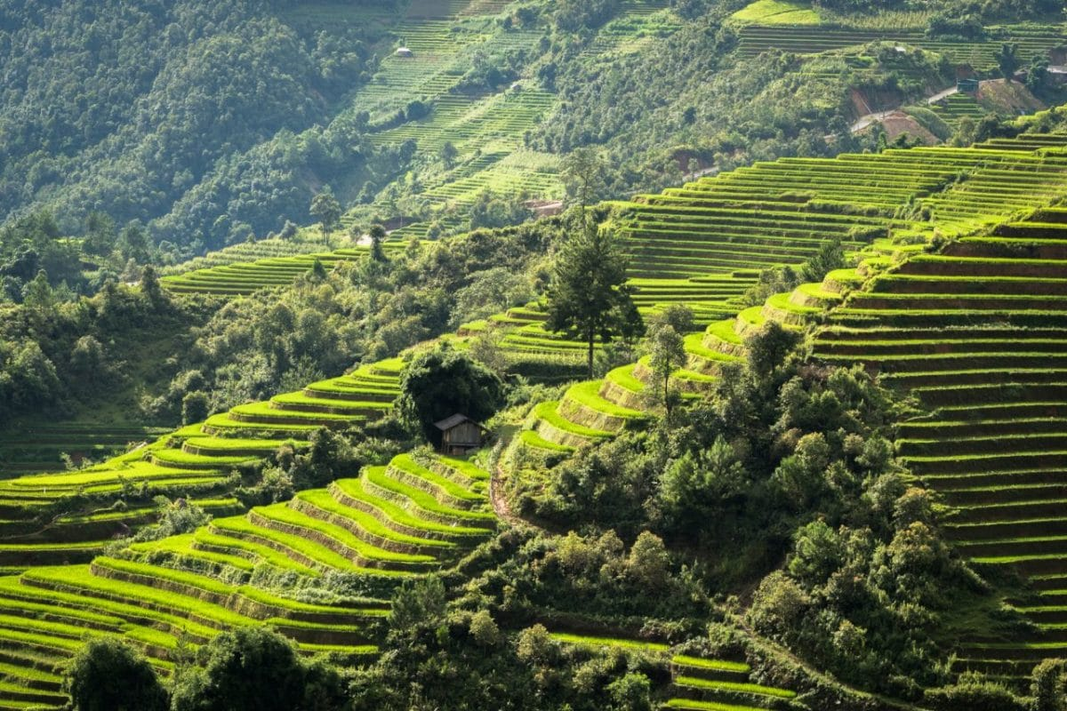 vietnam, ethnies minoritaire, portrait, rizières, la pan tan, mu cang chai