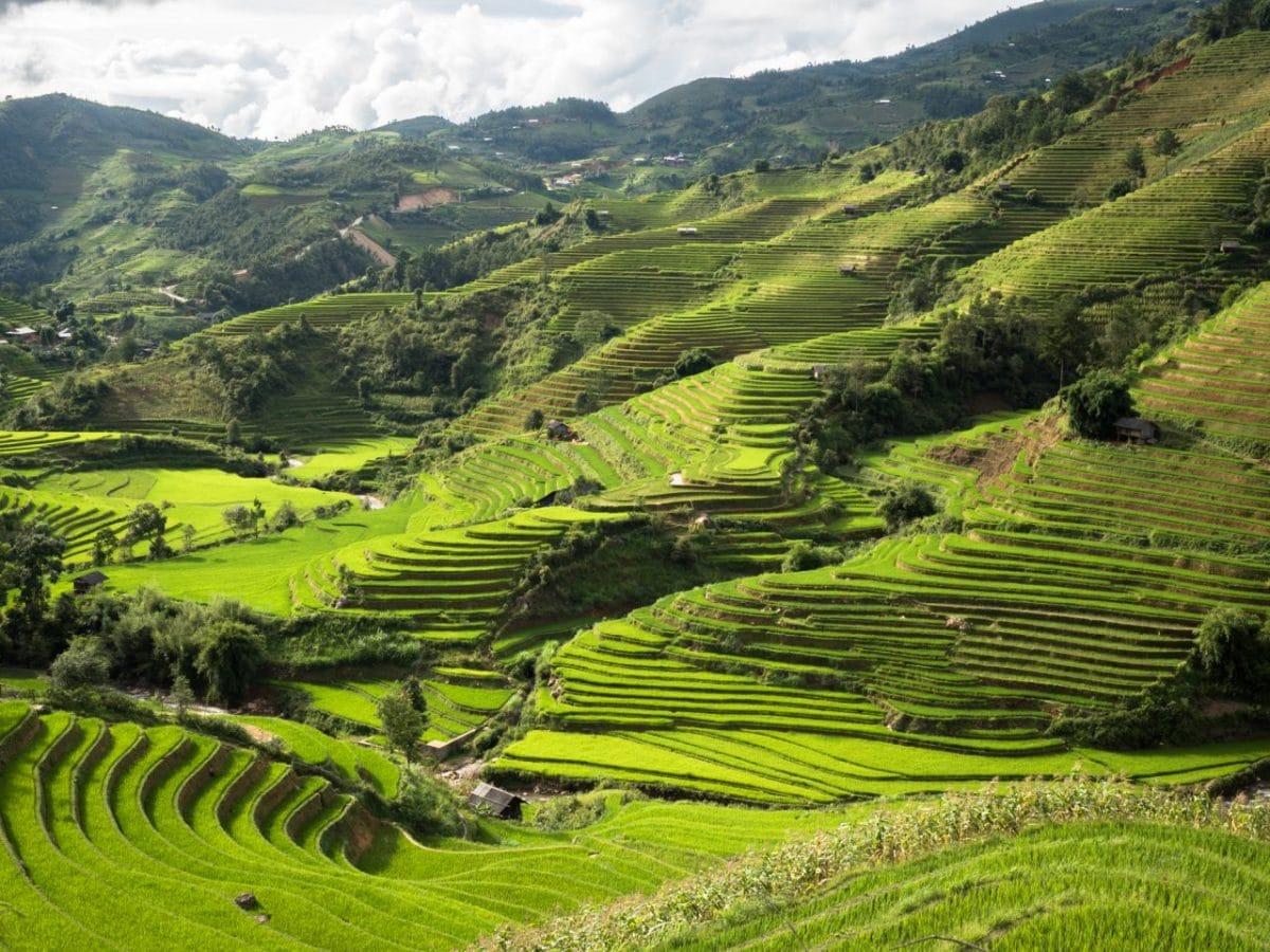 photo riziere vietnam-montagnes du nord vietnam-ethnies minoritaires du vietnam