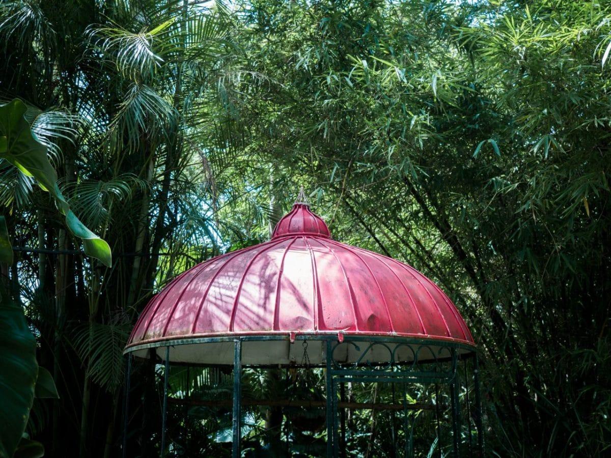 jardin botanique guadeloupe basse terre
