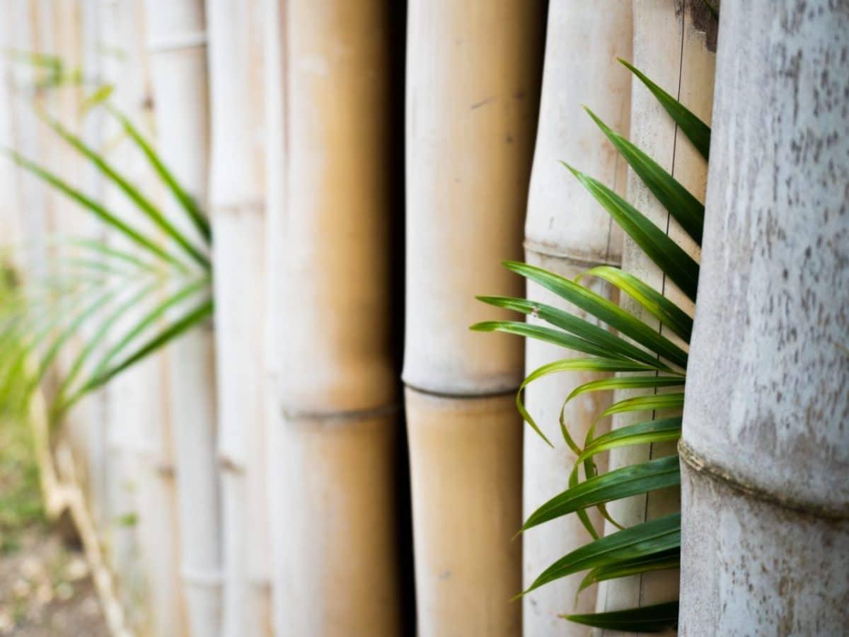 jardin botanique de deshaies en guadeloupe-Bambou