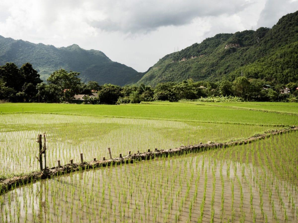 vietnam nord-riziere au vietnam-ethnies minoritaires du vietnam-photo vietnam