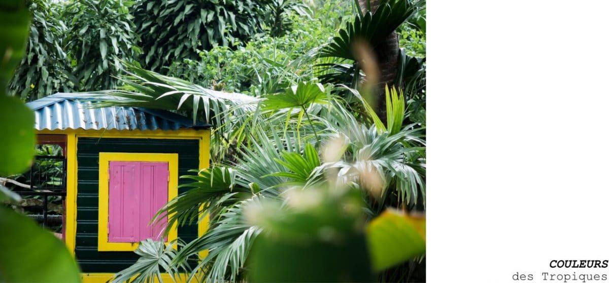 jardin botanique de deshaies - fleur tropicale guadeloupe - jardin botanique coluche guadeloupe