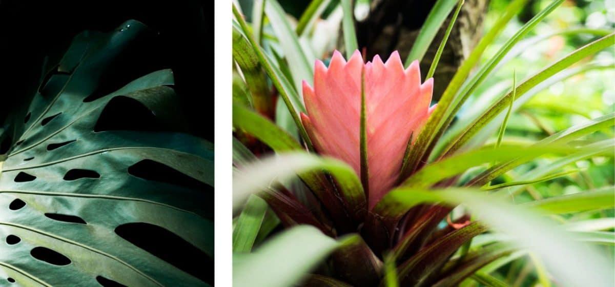 guadeloupe deshaies jardin botanique-fleur tropicale basse terre