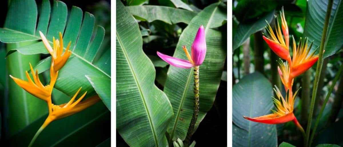 jardin botanique basse terre-fleur tropicale guadeloupe