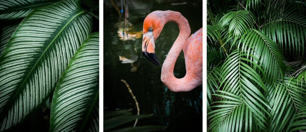 jardin botanique basse terre guadeloupe-fleur tropicale guadeloupe