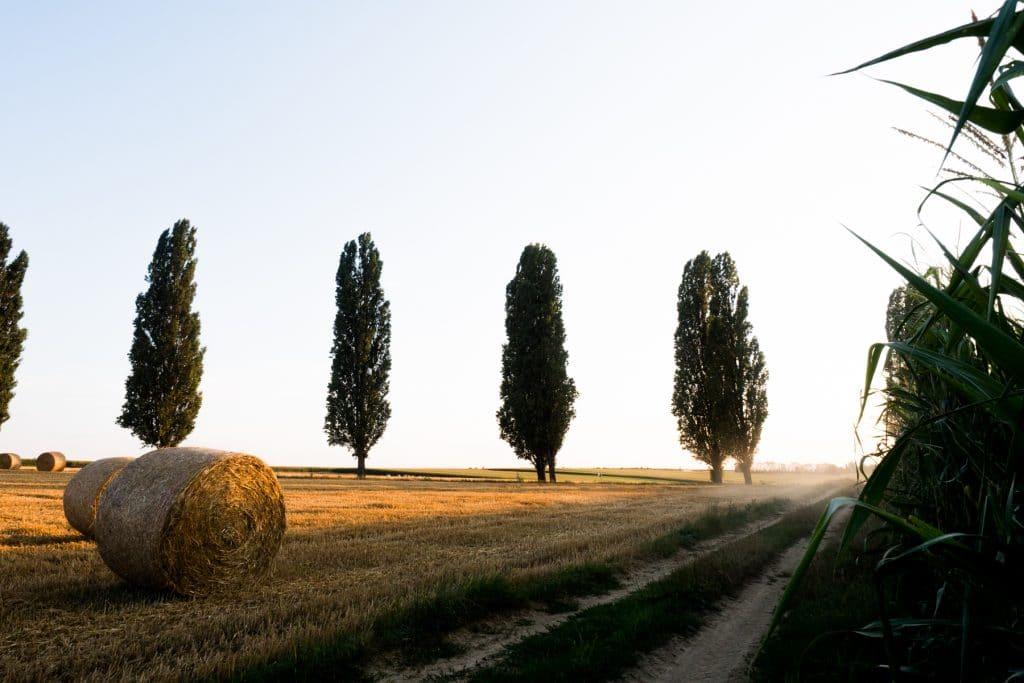 la route des cretes-vosges paysage-photos alsace vosges-campagne alsacienne