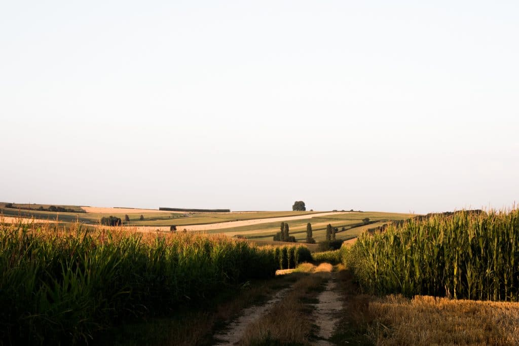 campagne alsacienne-court séjour alsace-photos alsace vosges-voyage en alsace