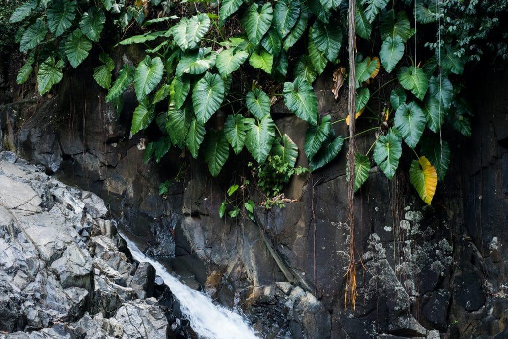 saut d acomat-guadeloupe foret tropicale-cascade le saut d acomat