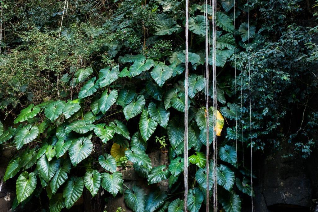 le saut d acomat pointe noire guadeloupe-cascade le saut d acomat-guadeloupe foret tropicale