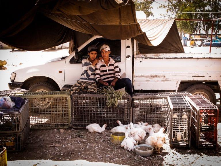 le marché tunisien - Tunisie - Un marché de village en Tunisie - portrait d'enfants tunisiens avec des poules