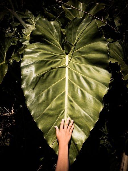 Foret tropicale Guadeloupe - végétation ile d'emeraude dans les Antilles