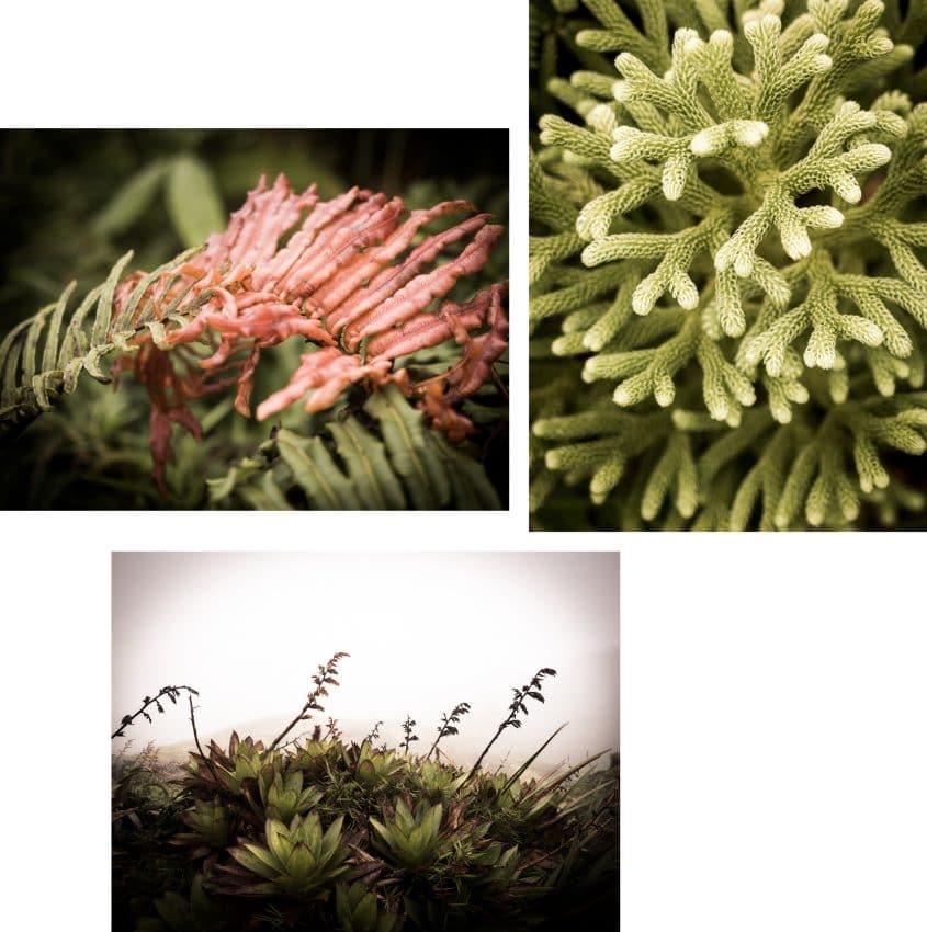 la soufrière-randonnée la soufrière-végétation ile de montserrat en guadeloupe aux Antilles