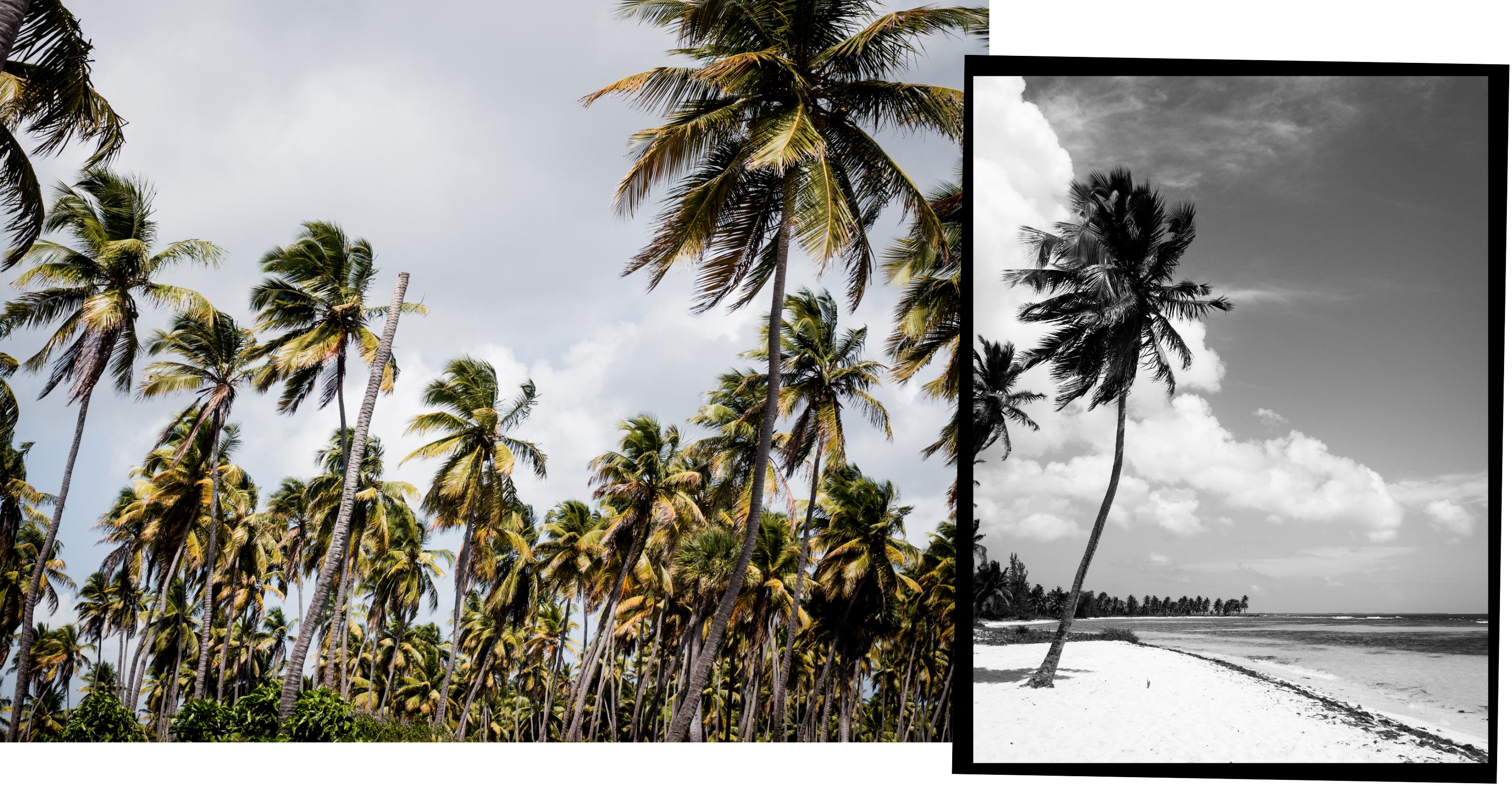 voyage caraibes-saona republique dominicaine - excursion en bateau à saona- plages paradisiaques- caraïbes
