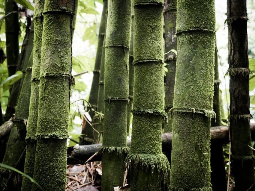 Visite guadeloupe - bambou guadeloupe