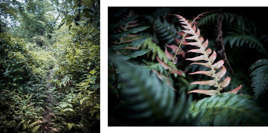 Photo voyage Guadeloupe dans la jungle et la forêt tropicale