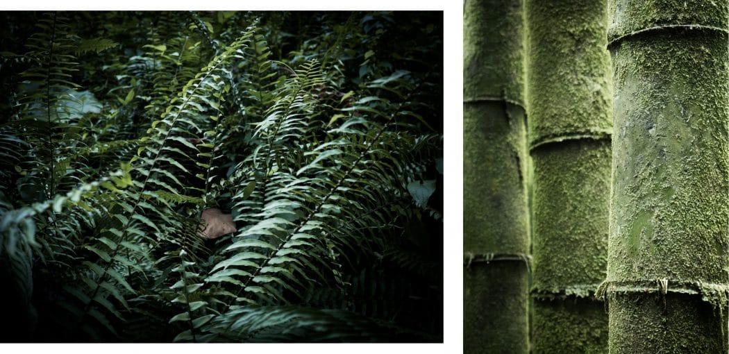 photo de la guadeloupe et de la froêt tropicale vers la cascade paradis