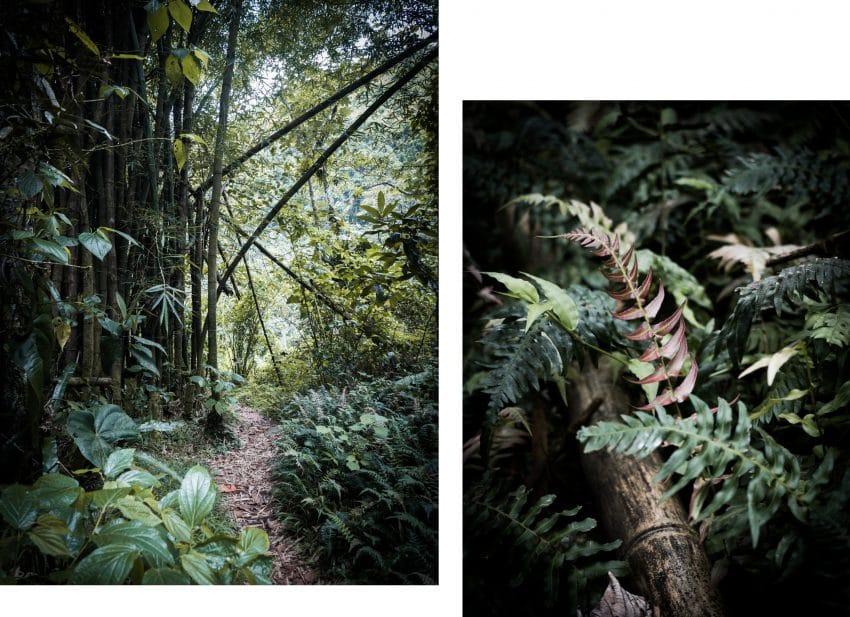 randonnée cascade paradis dans la forêt tropicale de Guadeloupe