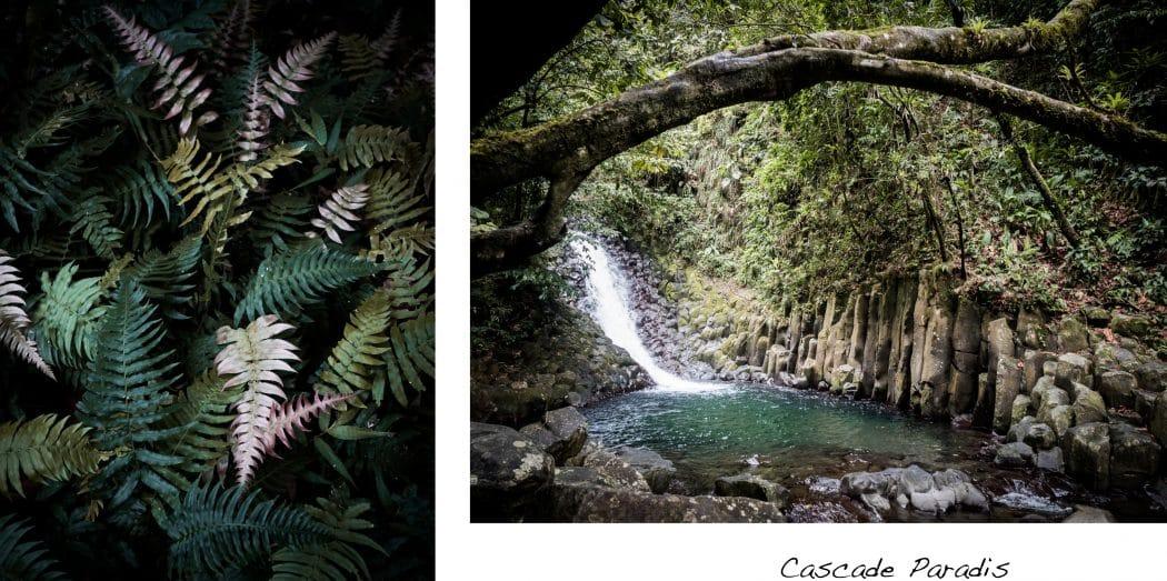 Photo Guadeloupe - Photo foret tropicale et de la cascade paradis en Guadeloupe