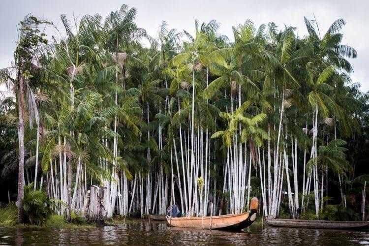 Voyage Guyane Amazonie - Photo d'une piragoue sur le fleuve Saint Laurent du Maroni