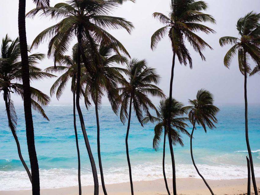 visiter la Barbade-plages paradisiaques- bottom bay