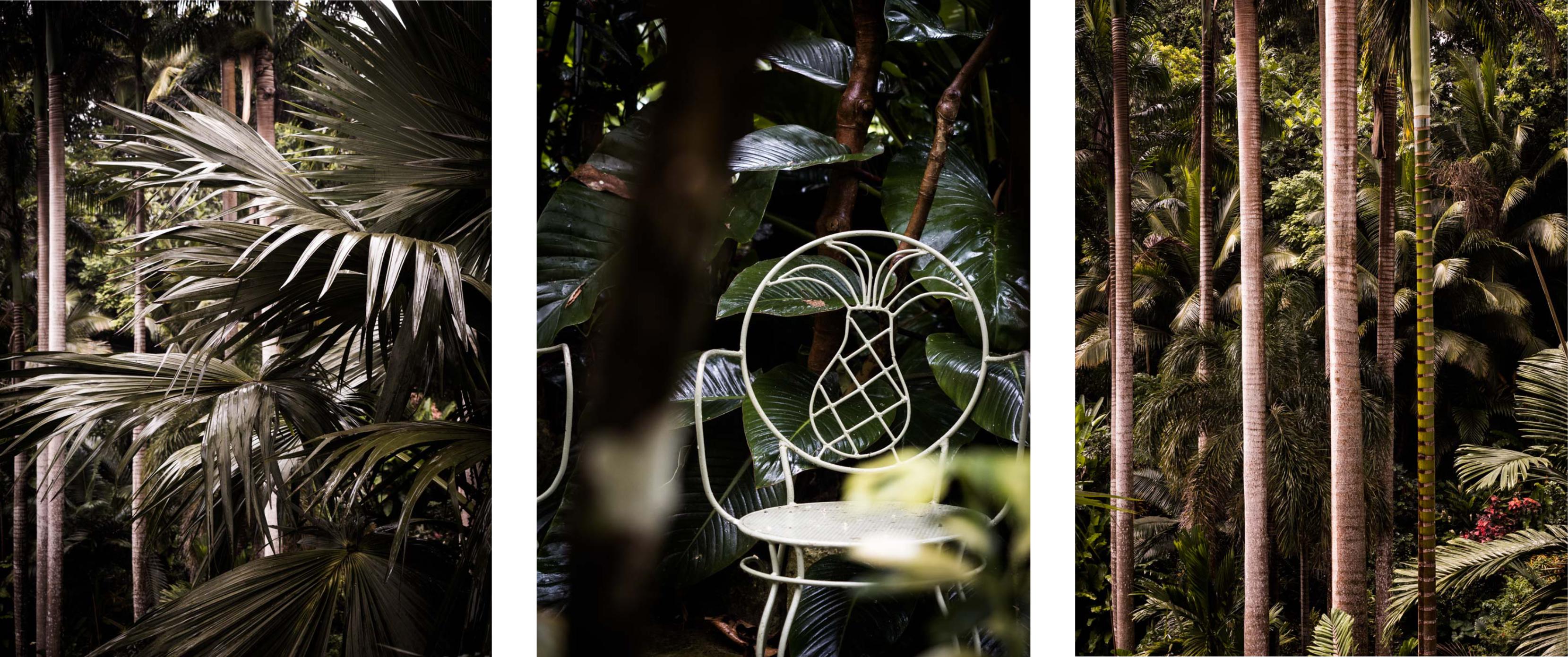 visiter la barbade - jardin tropical - huntes garden