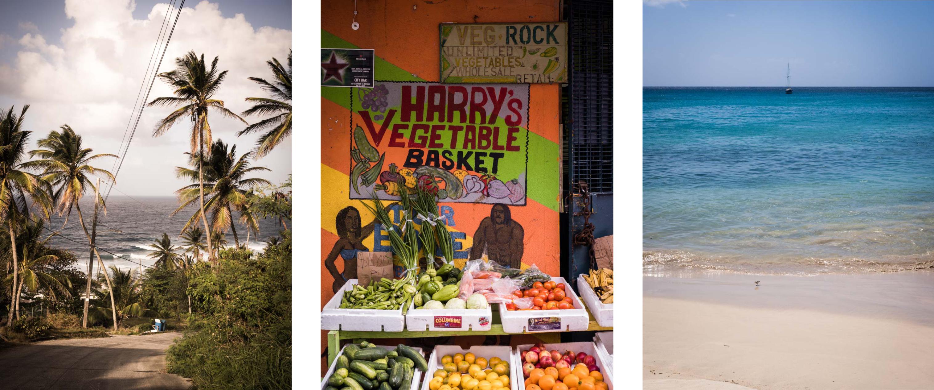 découvrir la barbade - antilles, jardin tropical - plages paradisiaques - bridgetown